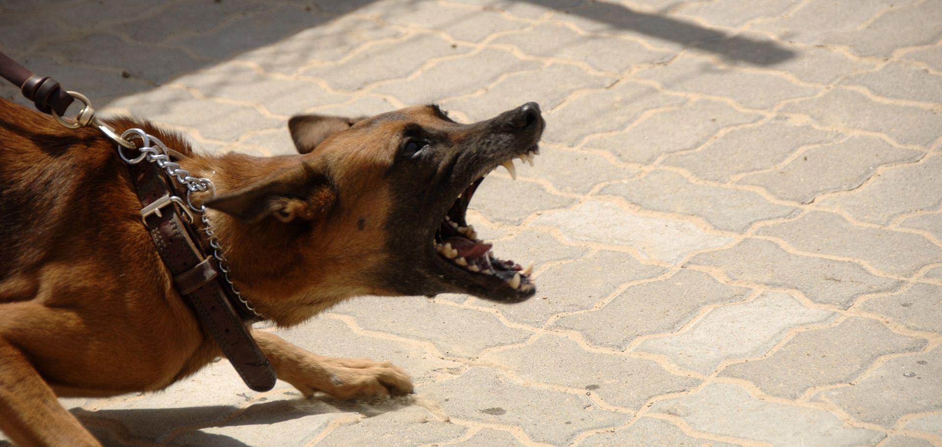 U Istri pas bez nadzora ugrizao muškarca, drugi zaklao ovcu