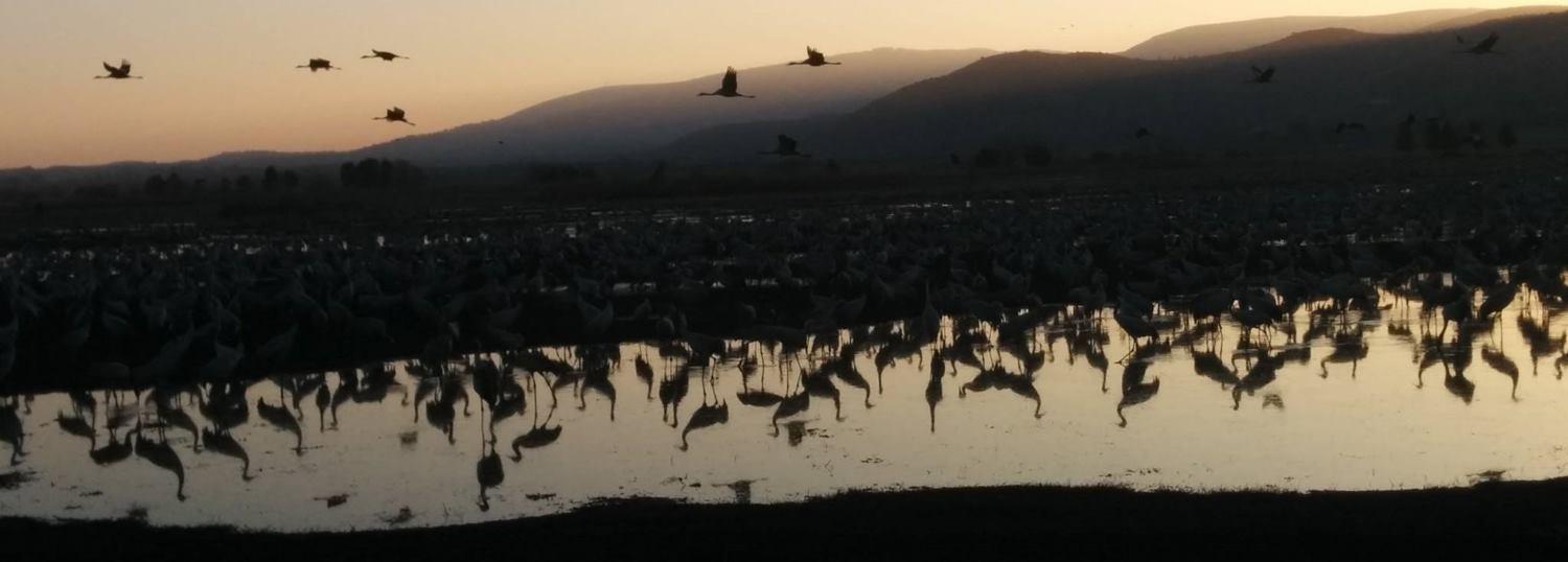 VIDEO: Ždralovi opet zauzeli dolinu Hula