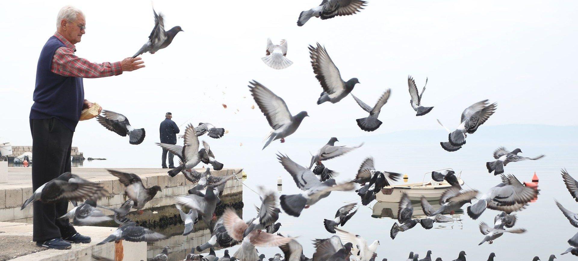 VIDEO: Zanimljiv umjetnički projekt s golubovima