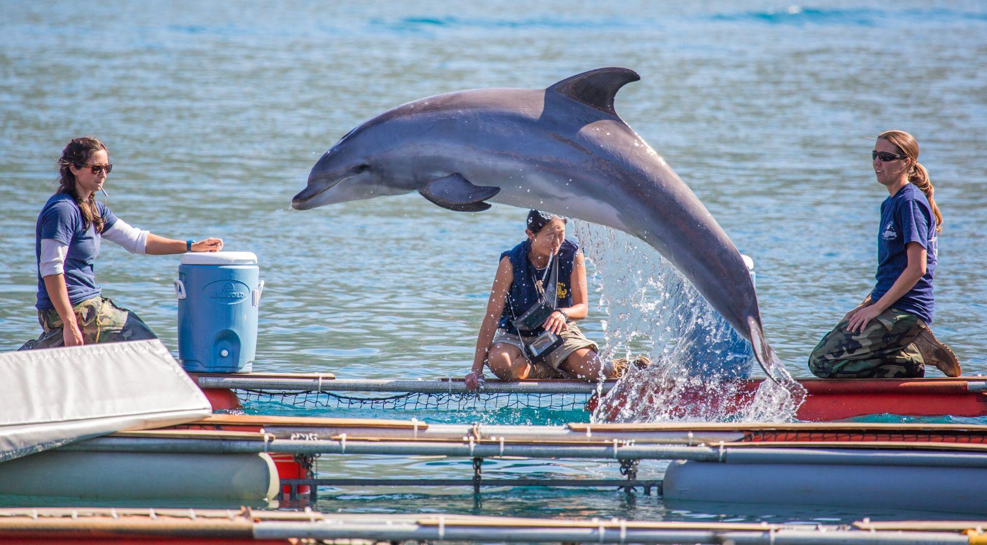 SPECIJALNA POSTROJBA: Rusija raspisala natječaj, traže pet delfina za vojne svrhe