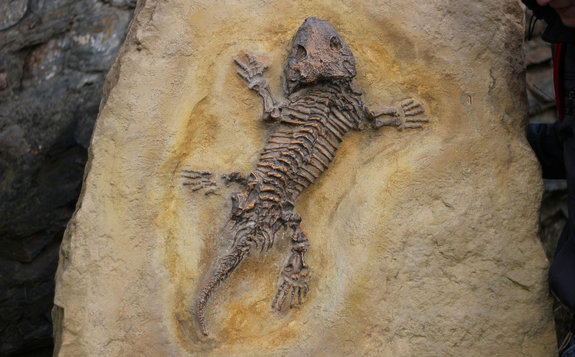 """Fosilizirani gušter, star 99 milijuna godina, """"izgubljena karika"""" drevnog ekosustava"""