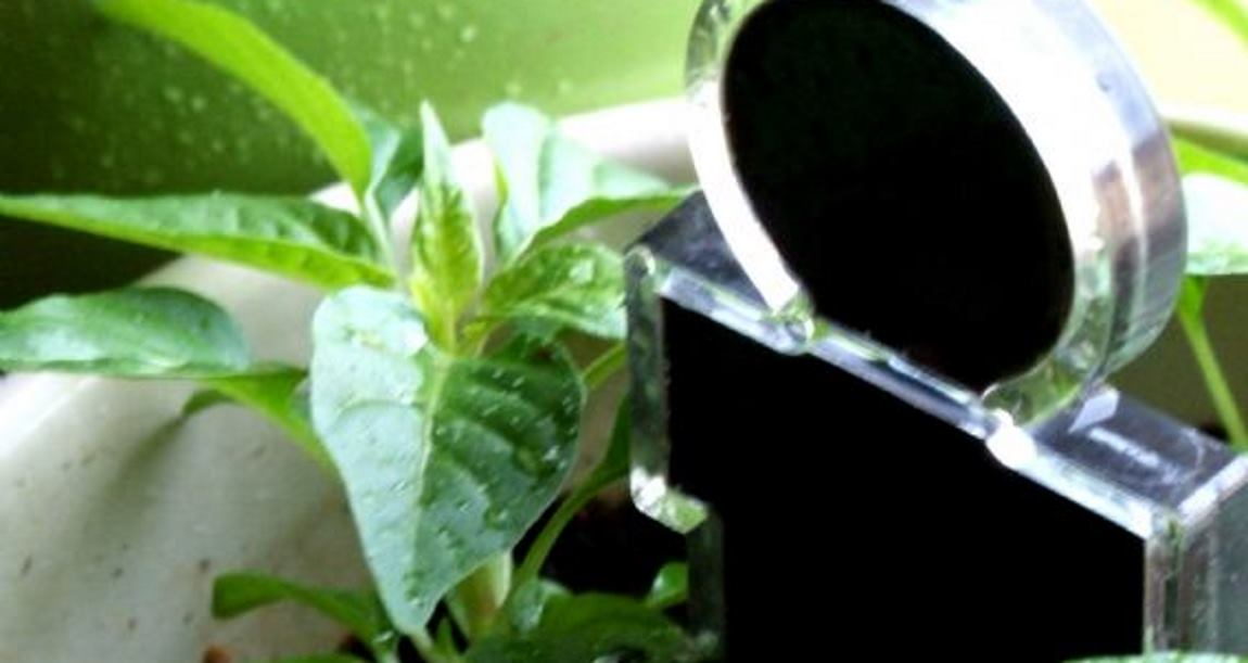 BIOCRYSTAL TEHNOLOGIJA Vito & Flora – neodoljivi pomoćnici ljubitelja cvijeća