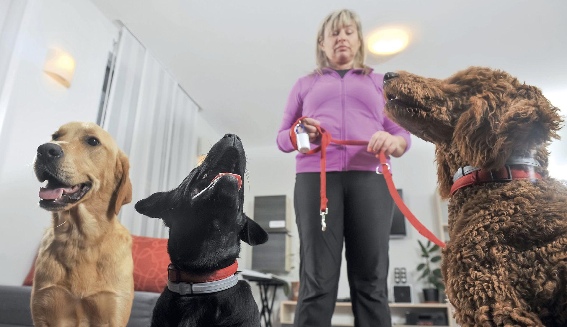 Jednogodišnji odgoj terapijskih pasa u obitelji volontera
