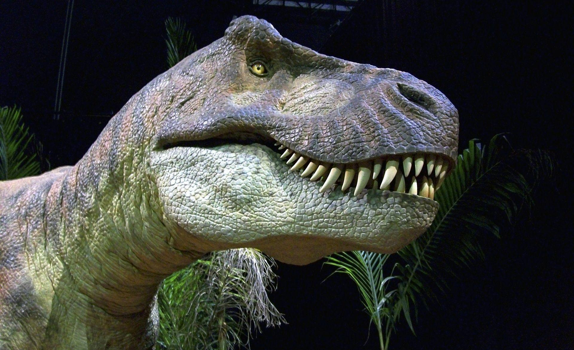 Od srpnja u Rijeci velika izložba o dinosaurima