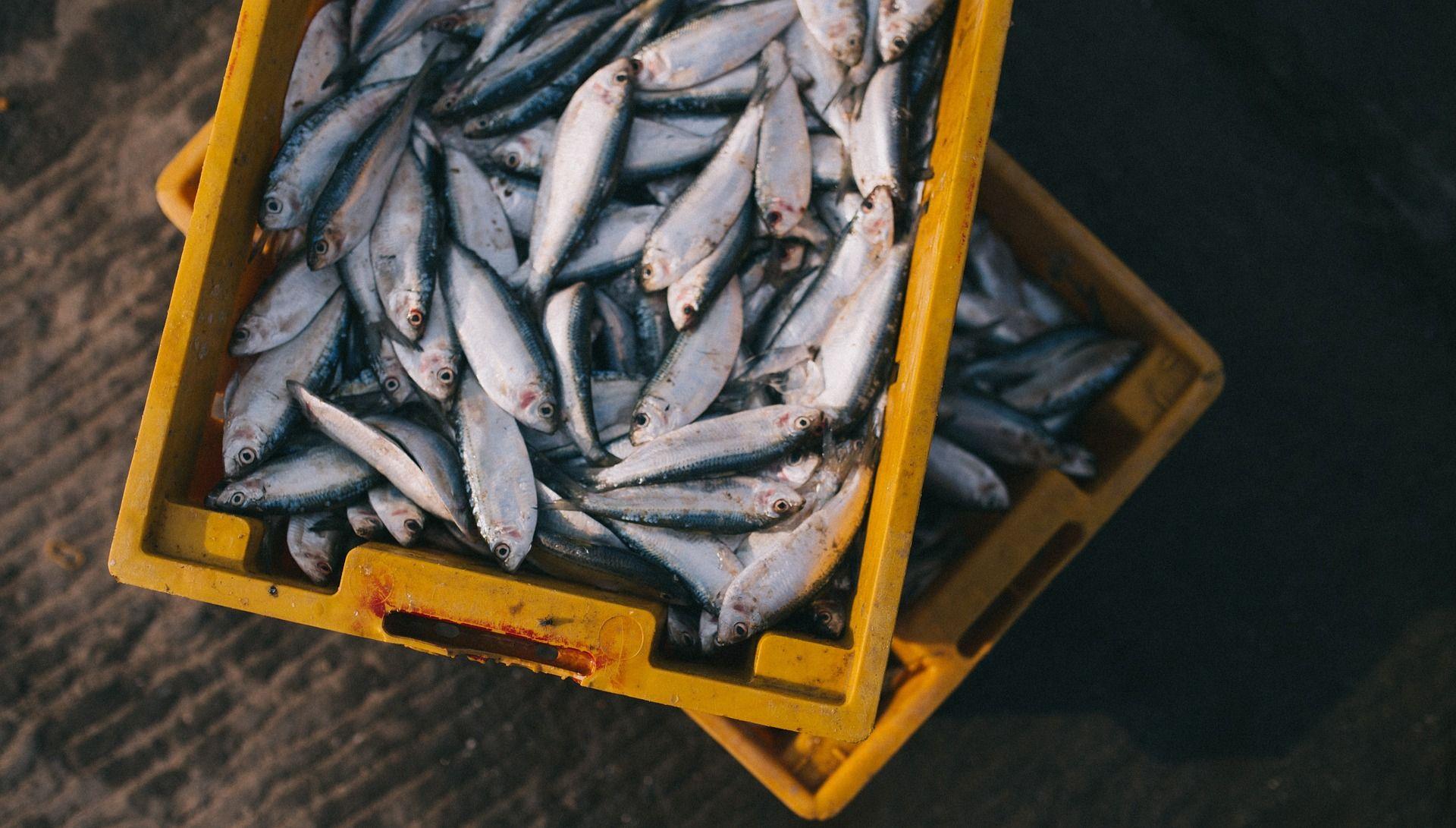 Poduzetni IS se okrenuo prodaji automobila i ribe, zarađuje milijune