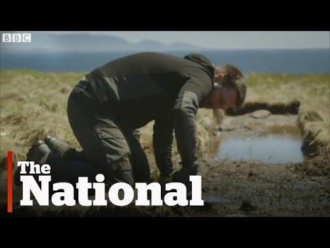 """VIDEO: Otkriveno drugo vikinško naselje u Americi? """"Lokacija vrišti, 'Molim vas, iskopajte me!'"""""""