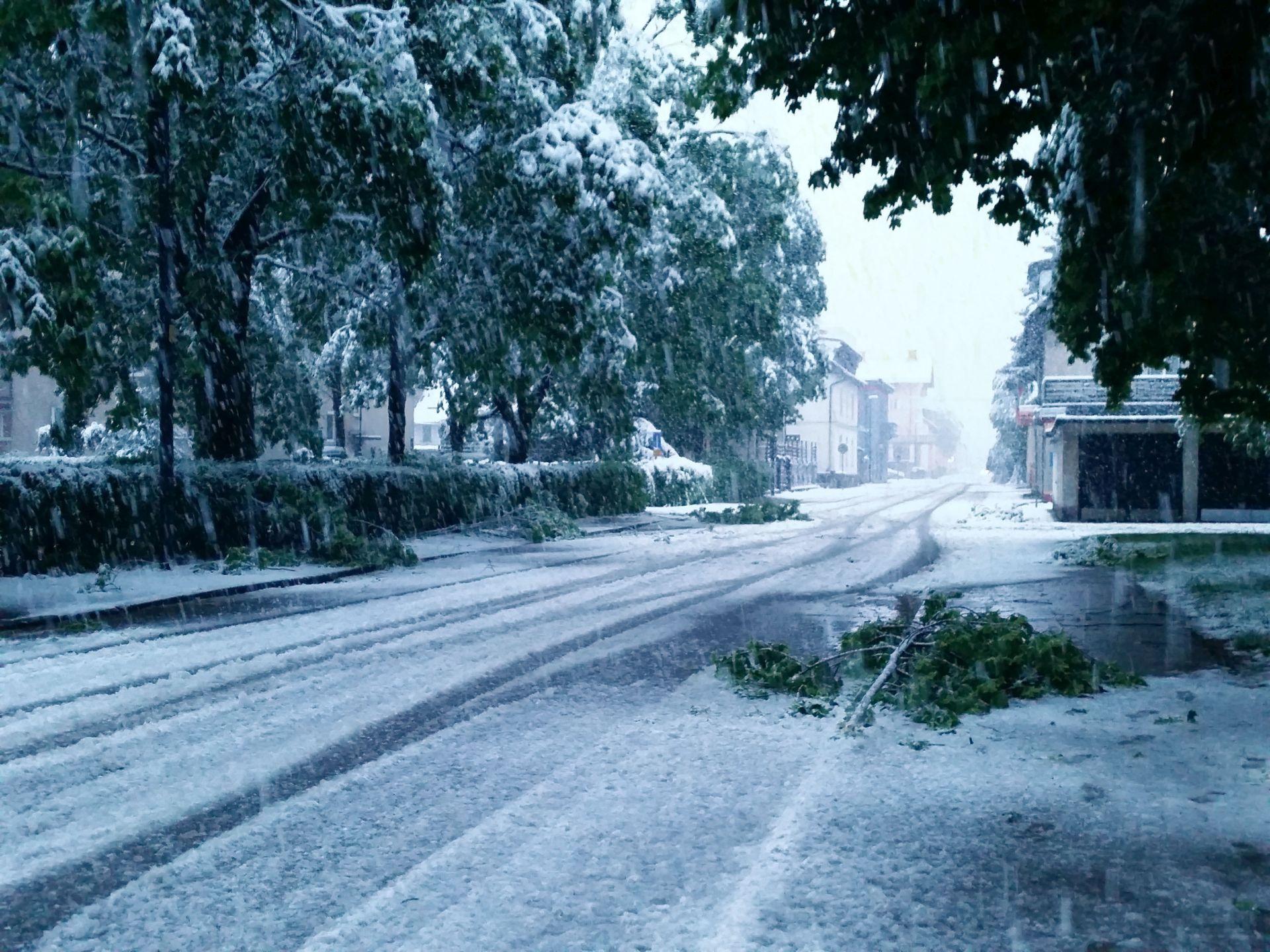 Slovenija: Zbog snijega i mraza goleme štete na poljoprivrednim kulturama
