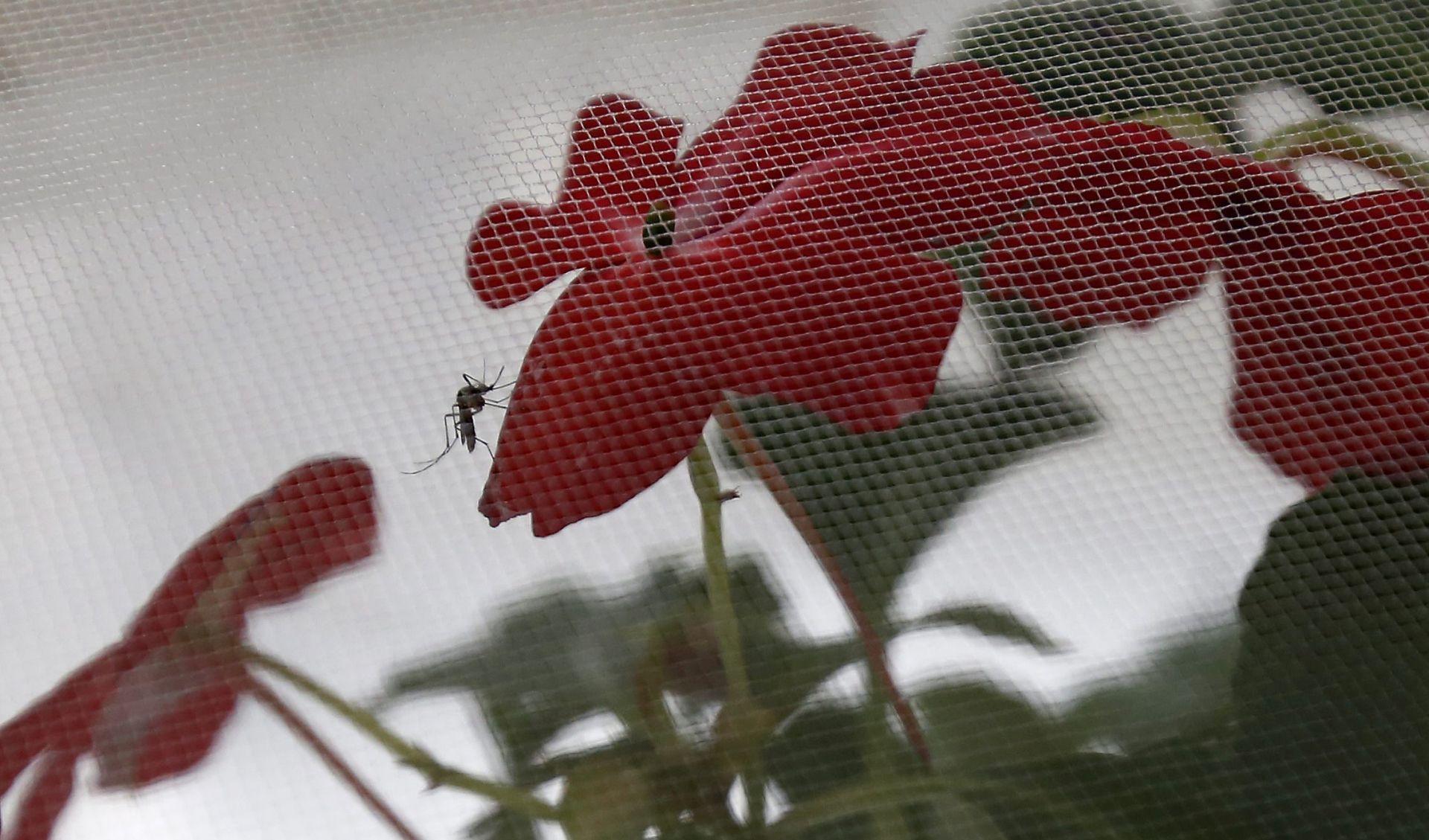 Zbog straha od zike više abortusa u Latinskoj Americi