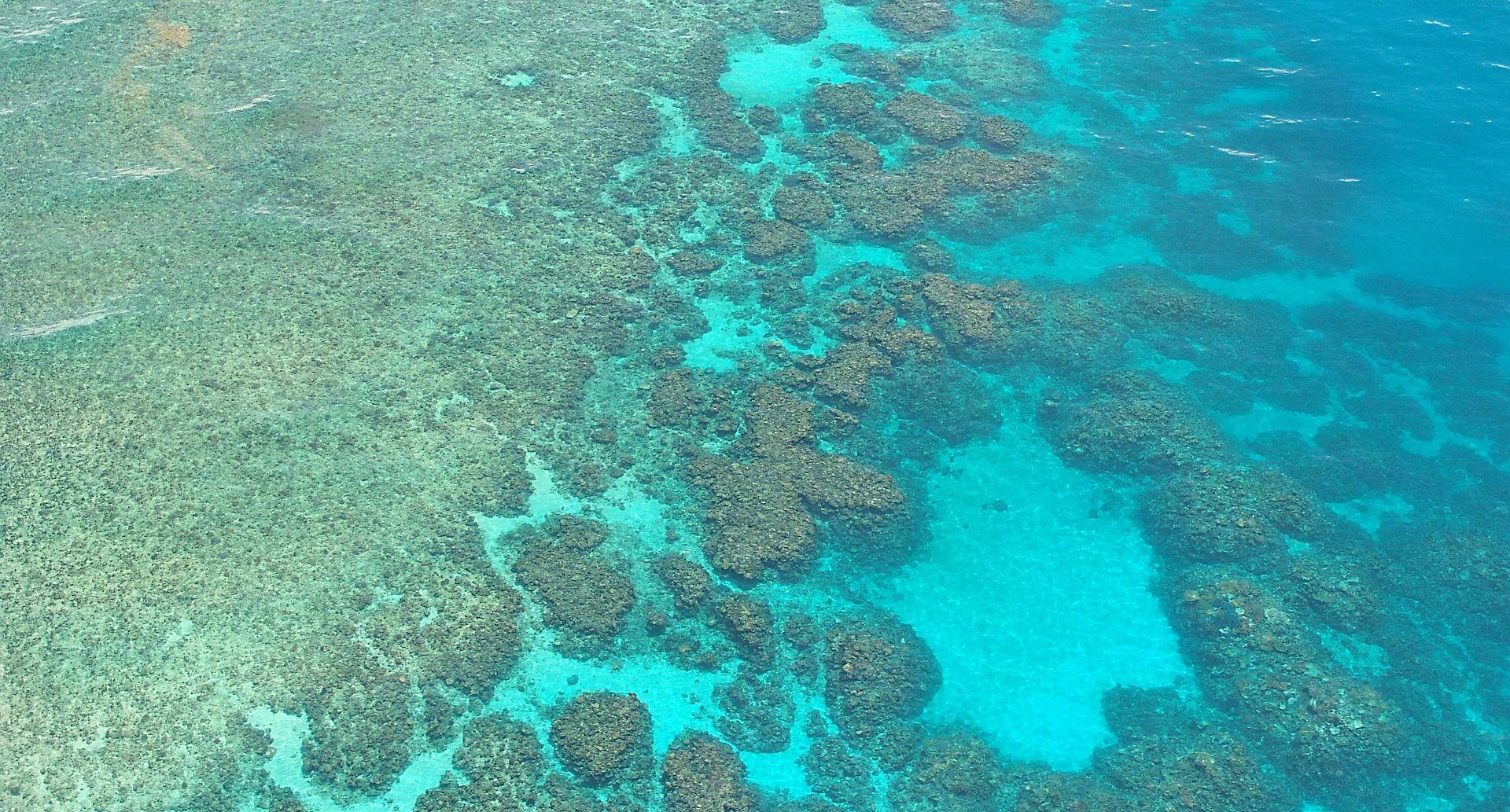 Australski premijer obećao milijardu dolara za Veliki koraljni greben