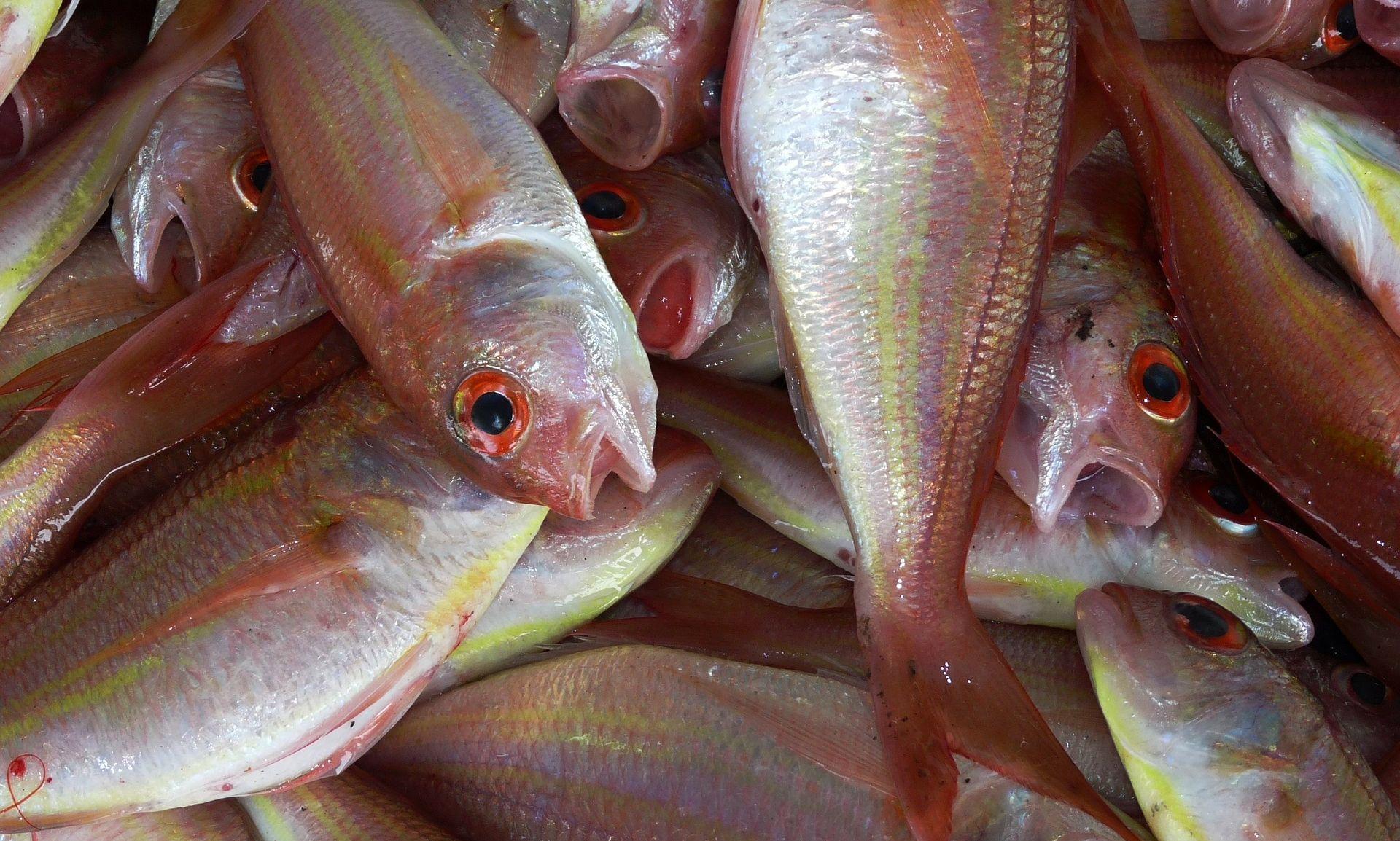 UJEDINJENI NARODI U svijetu se jede najviše ribe dosad