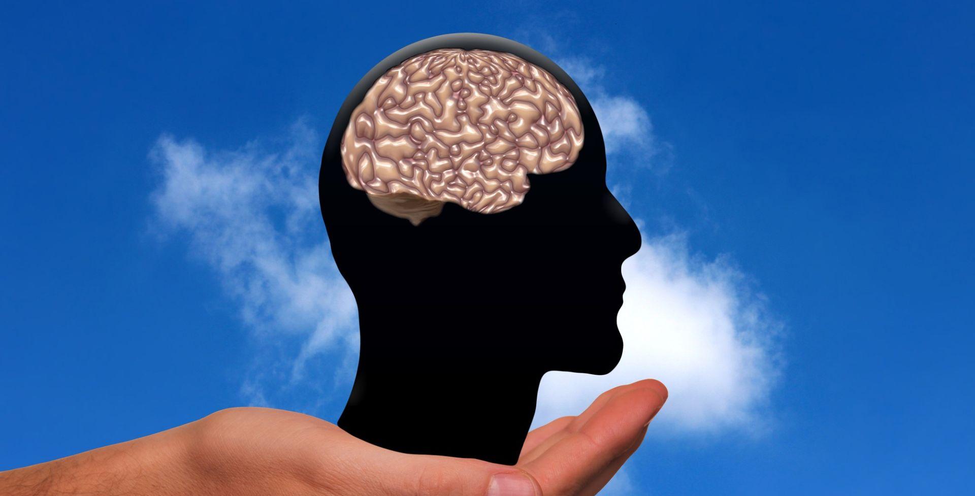 Nova mapa mozga dijeli korteks na još 97 regija