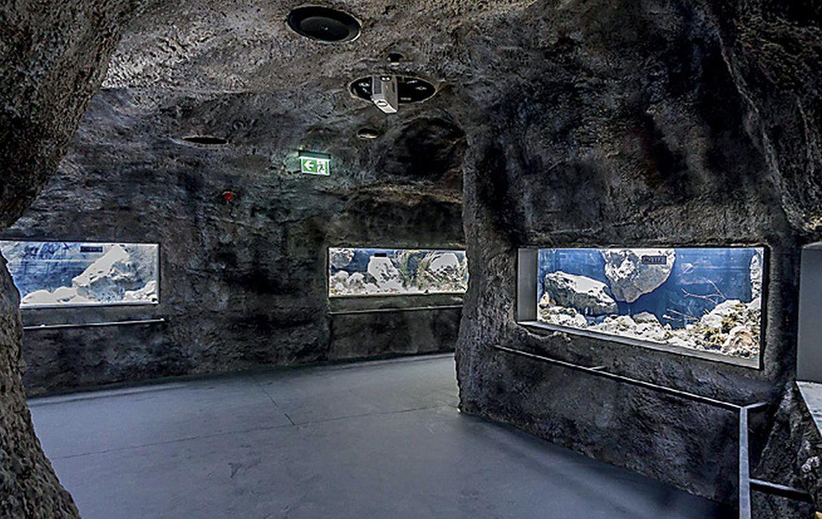 Karlovački slatkovodni akvarij imat će 25 bazena i pet tisuća riba i gmazova
