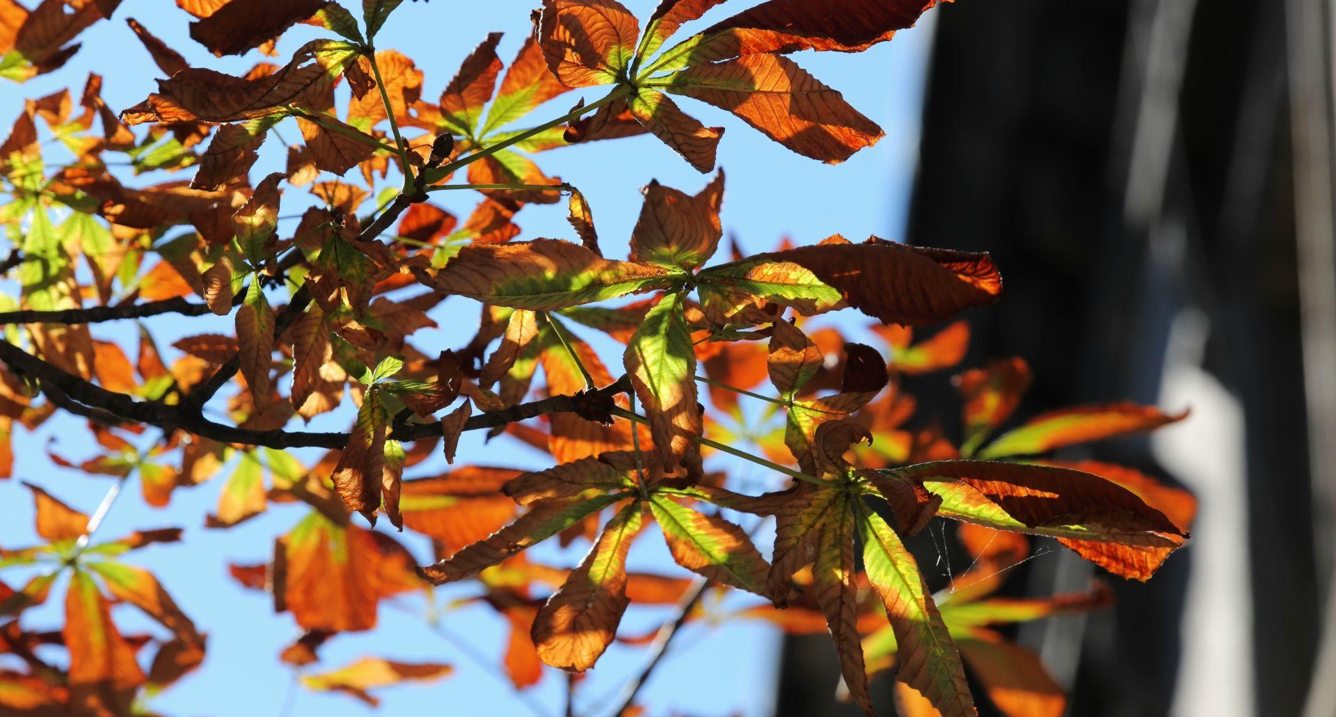 STIGLA DUGOROČNA PROGNOZA ACCUWEATHERA Evo kakva nas jesen očekuje