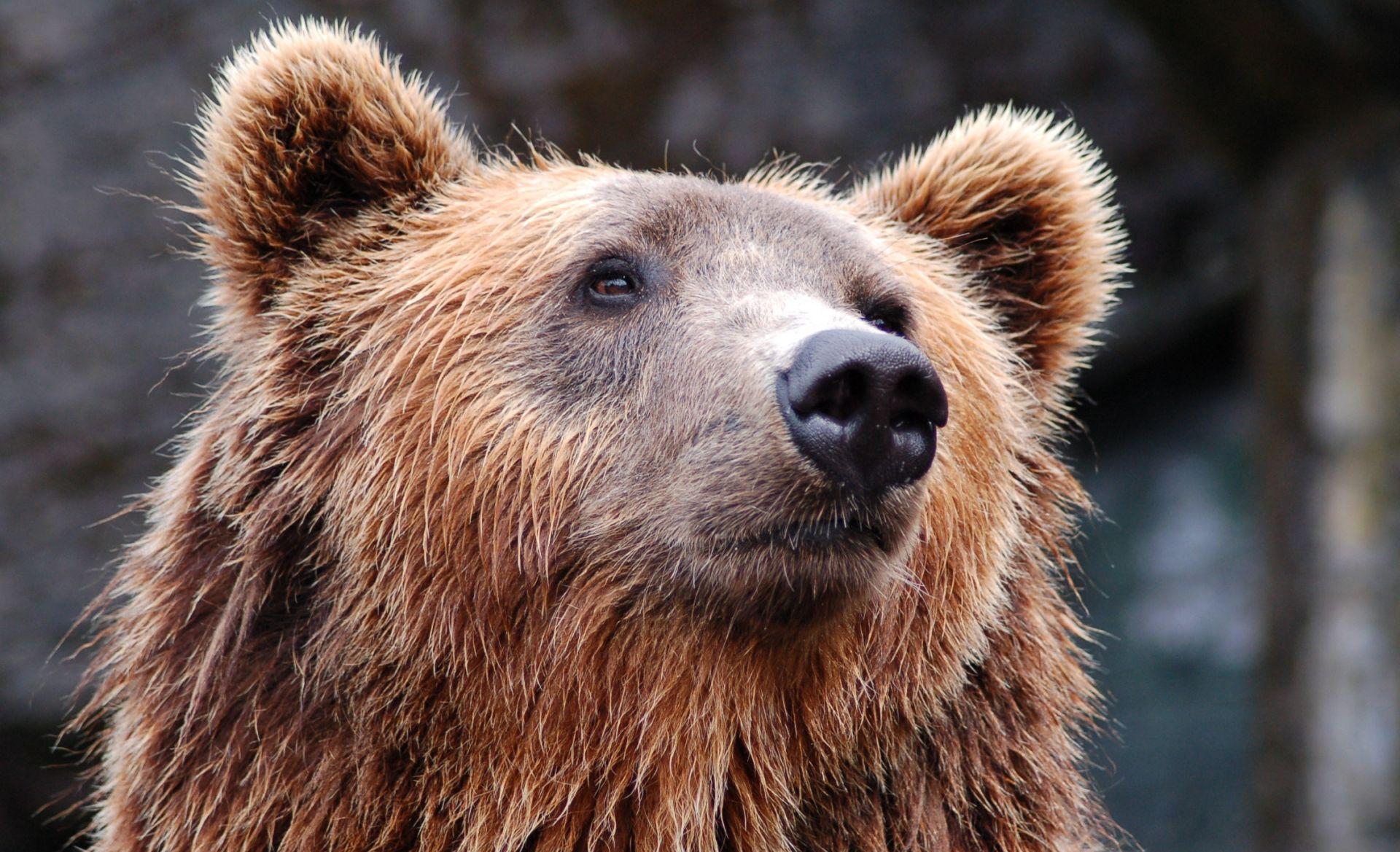 HGSS spasio planinara – slomio nogu bježeći od medvjeda