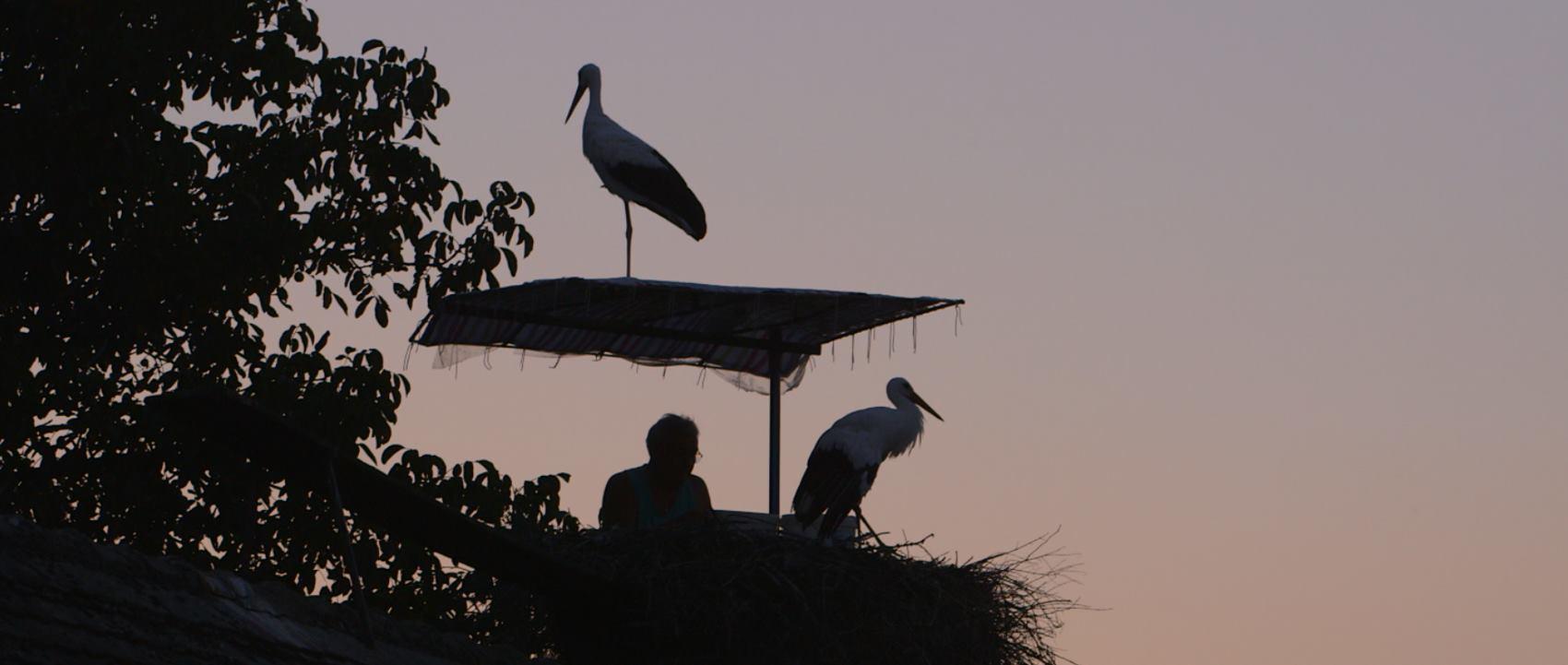 ZOO ZAGREB Svjetski dan ptica selica obilježava se 13. i 14. svibnja