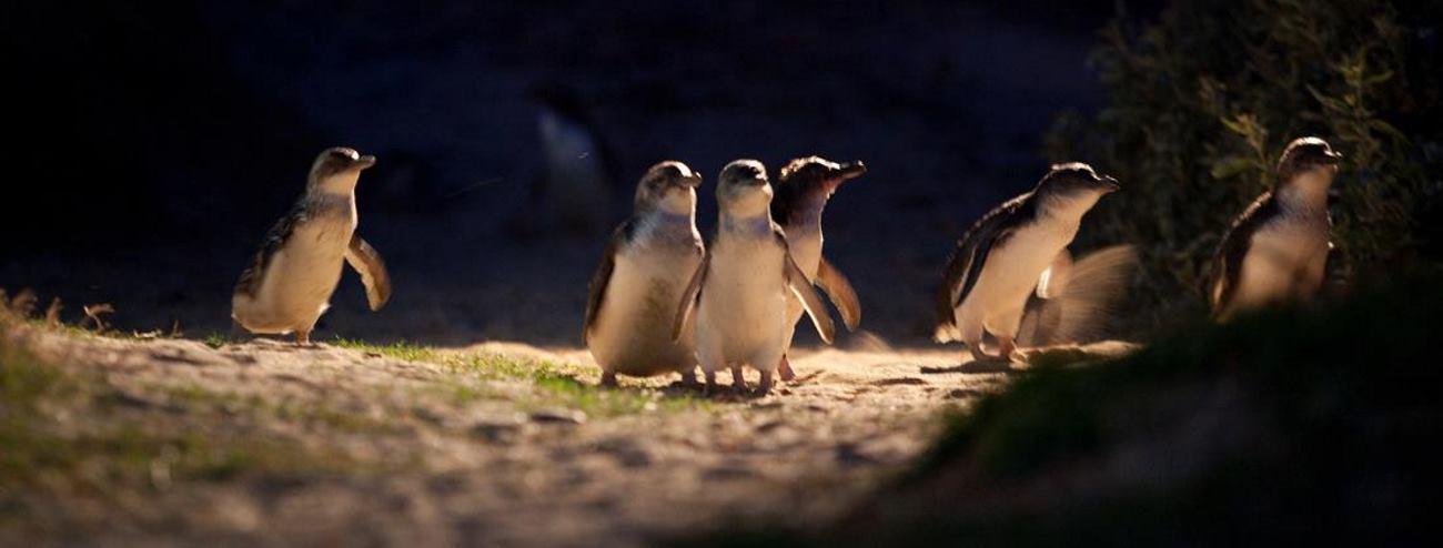 VIDEO: Pingvin iz Norveške vojske postao brigadir