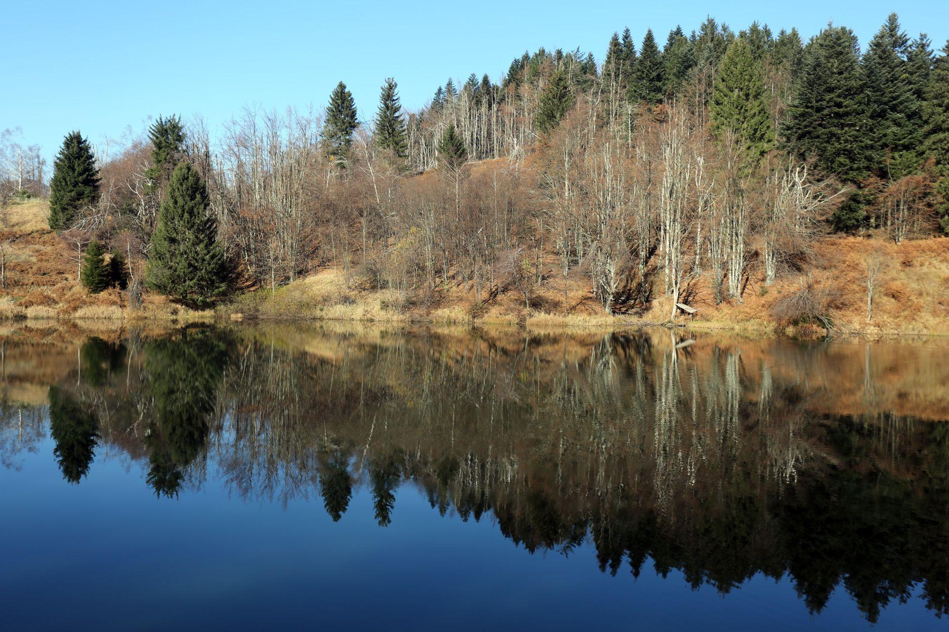 STRUČNJACI UPOZORAVAJU: Smrekov potkornjak uništava šume u Gorskom kotaru