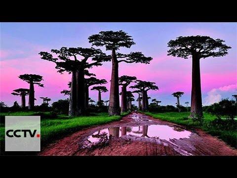 VIDEO: Znanstvenici žele izraditi širi popis biljnog svijeta u Keniji