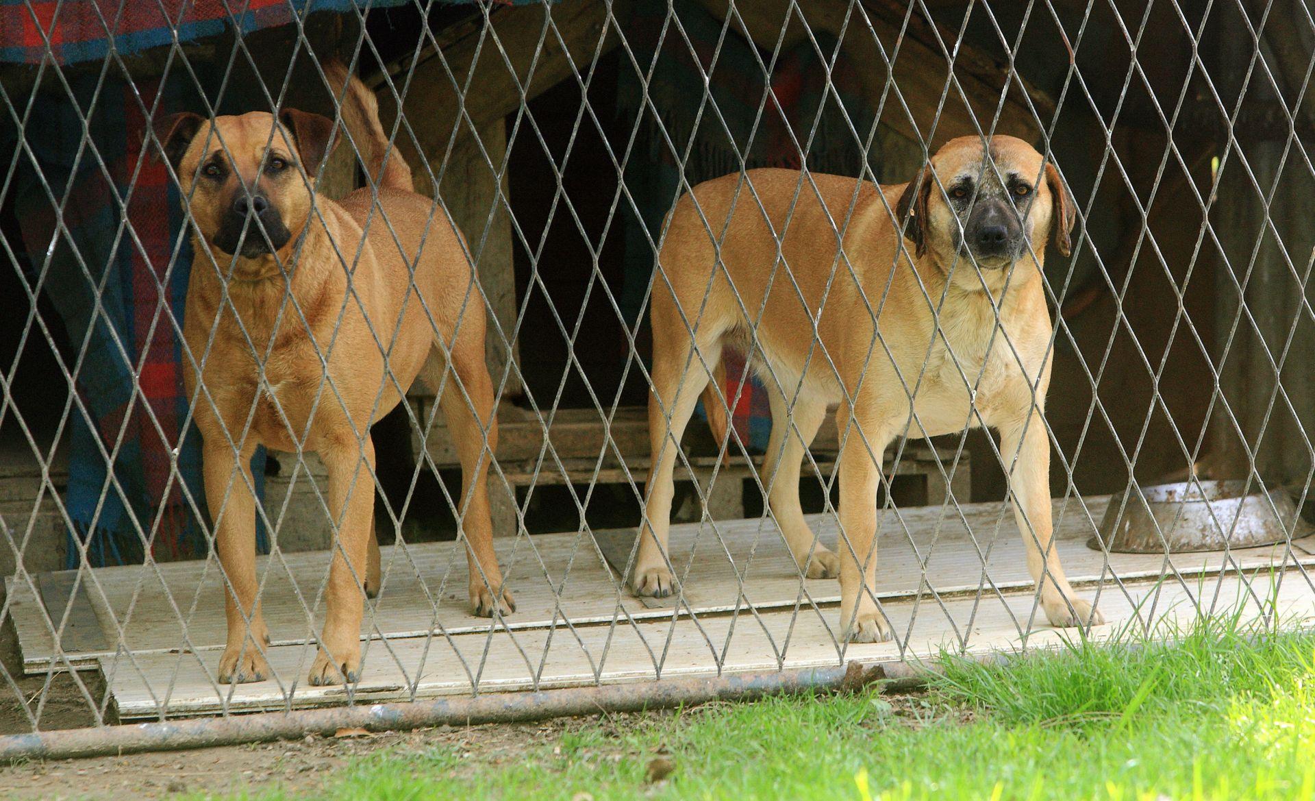 NOVI ZAKON: Zabrana vezivanja pasa, ali i dalje dopušteno usmrćivanje životinja
