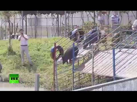 VIDEO: Životinjski triatlon na kineskoj farmi