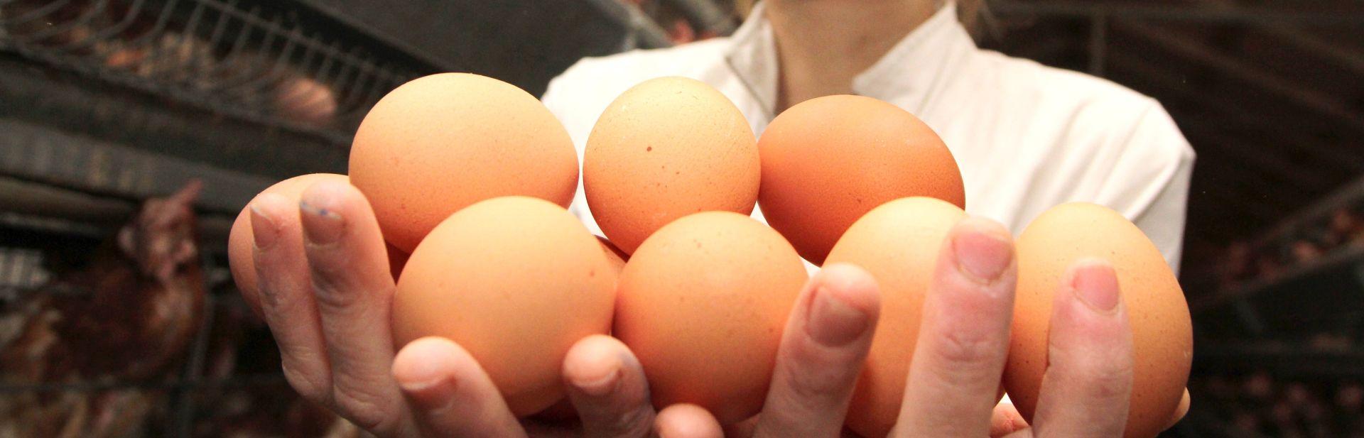 Tjedan dana nakon što je umro dječak Ministarstvo iz prodaje povuklo poljska jaja