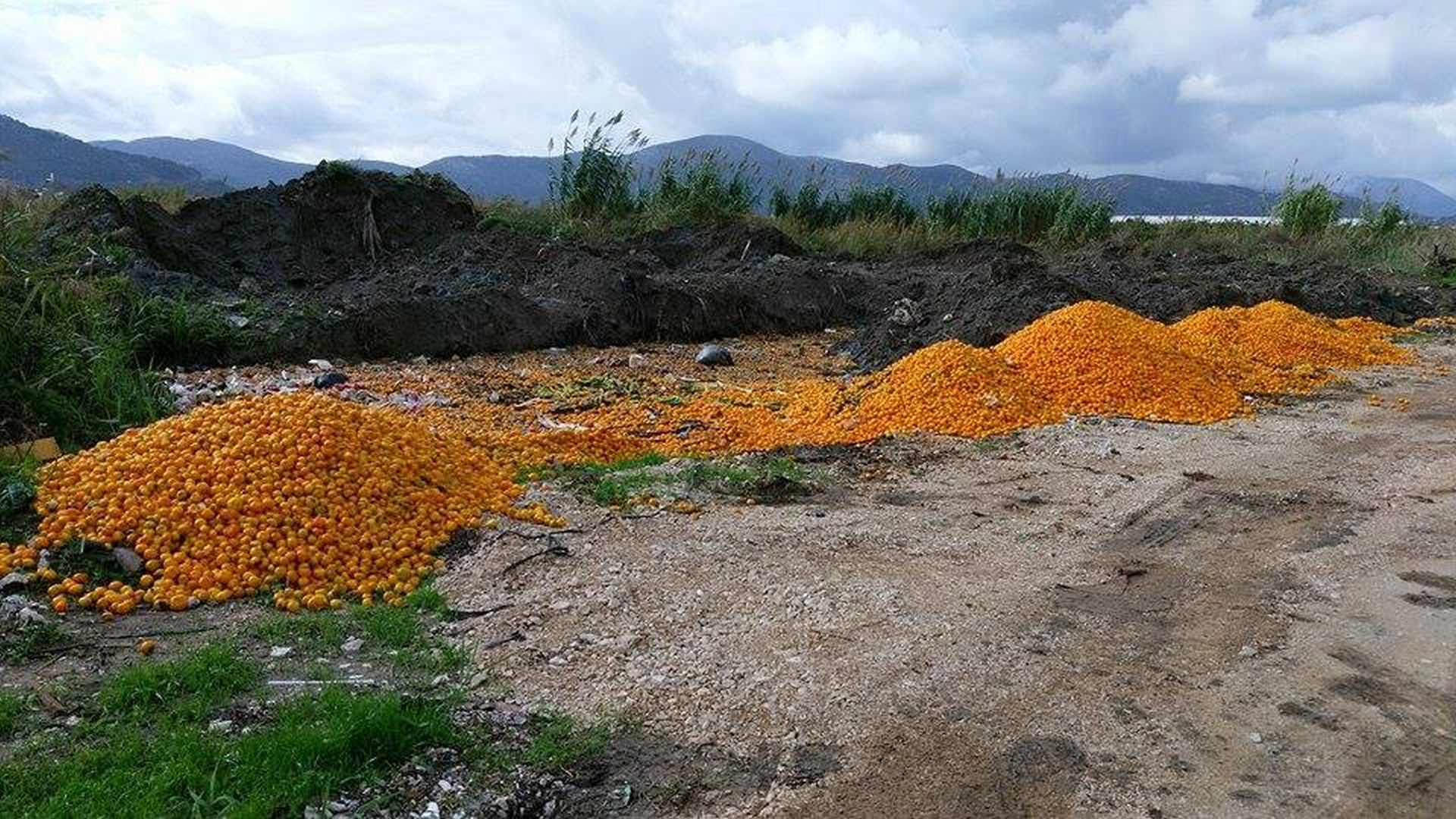 MUSA: Za ilegalno odbačene mandarine odgovoran je jedan od otkupljivača