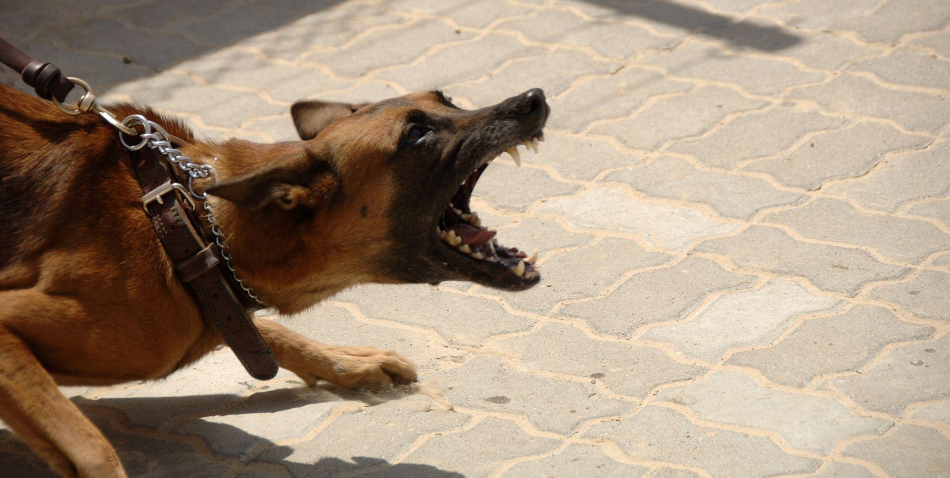 VINKOVCI Pas ugrizao desetogodišnjakinju za lice, nanio joj teške