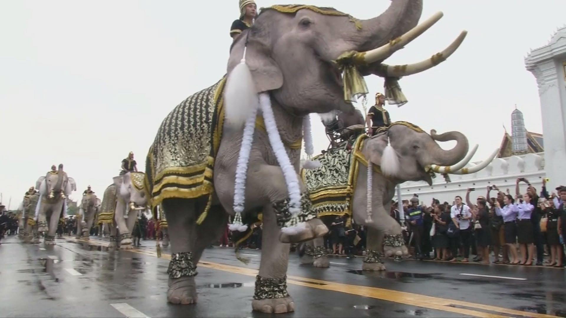 VIDEO: Parada slonova u čast preminulog kralja Bhumibola Adulyadeja