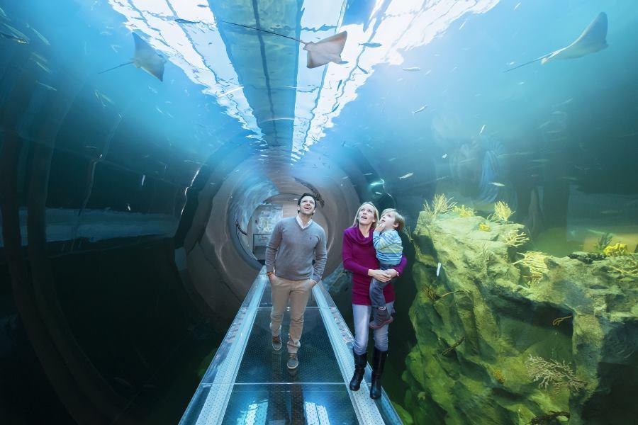 becka-kuca-mora-atlantski-tunel-1