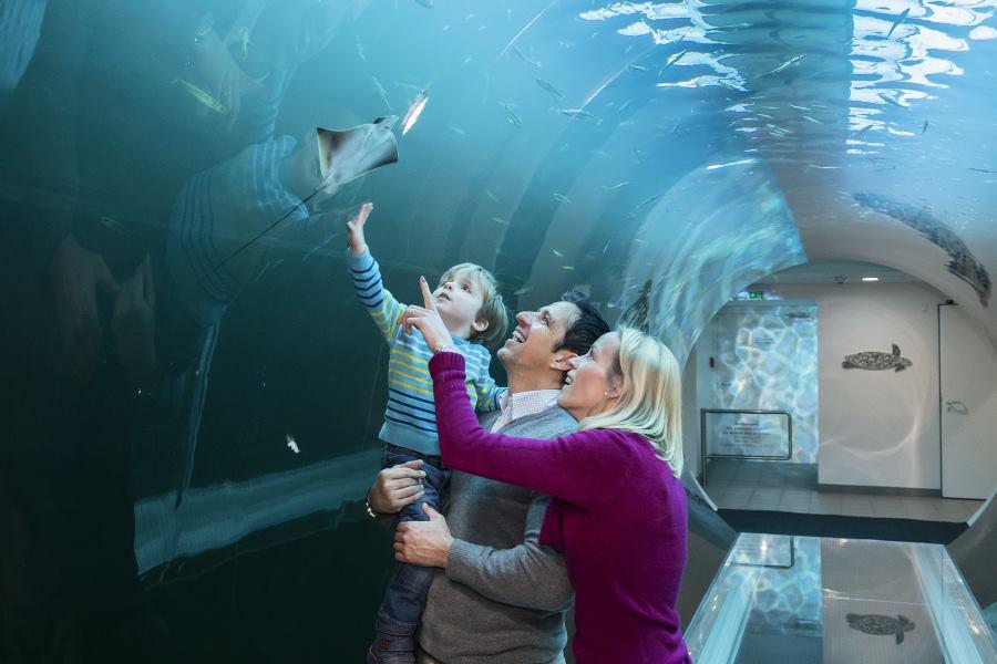becka-kuca-mora-atlantski-tunel-2