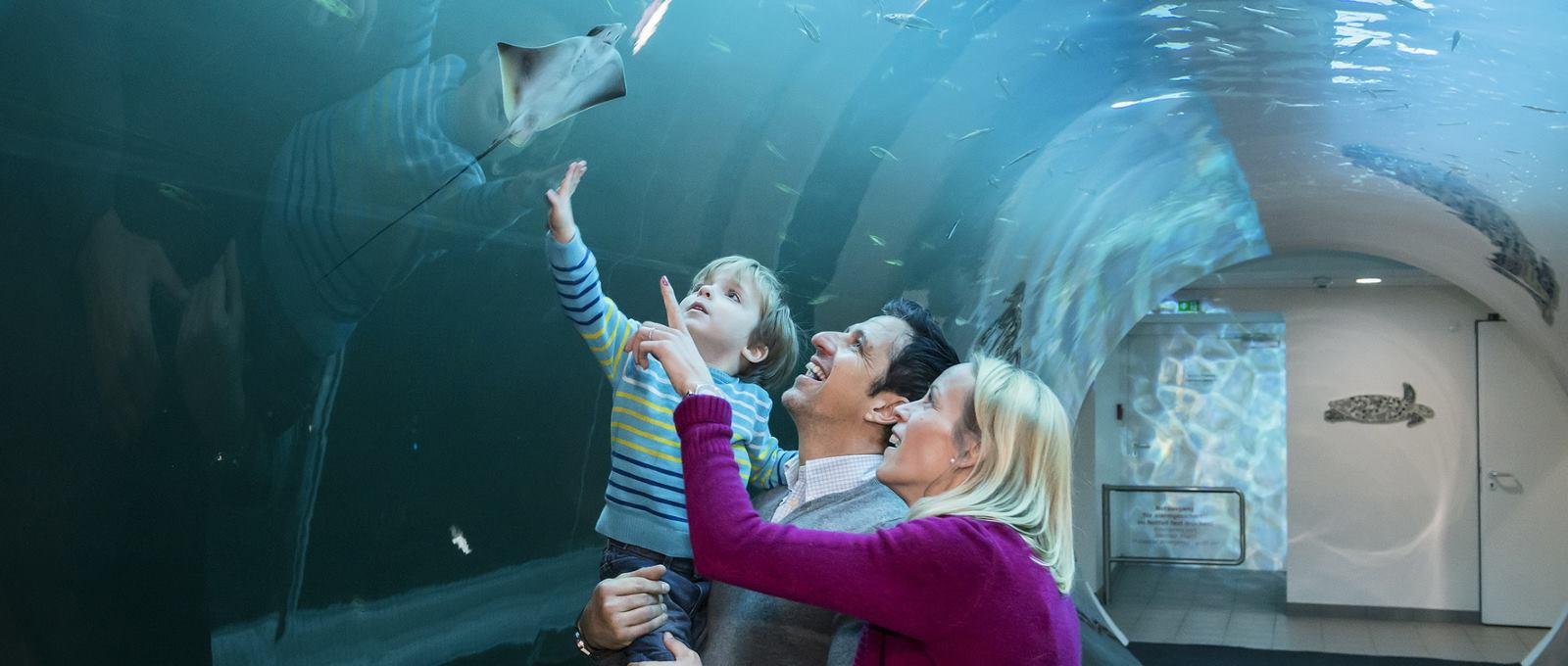 FOTO: Bečka kuća mora bogatija za još jednu atrakciju – Atlantski tunel