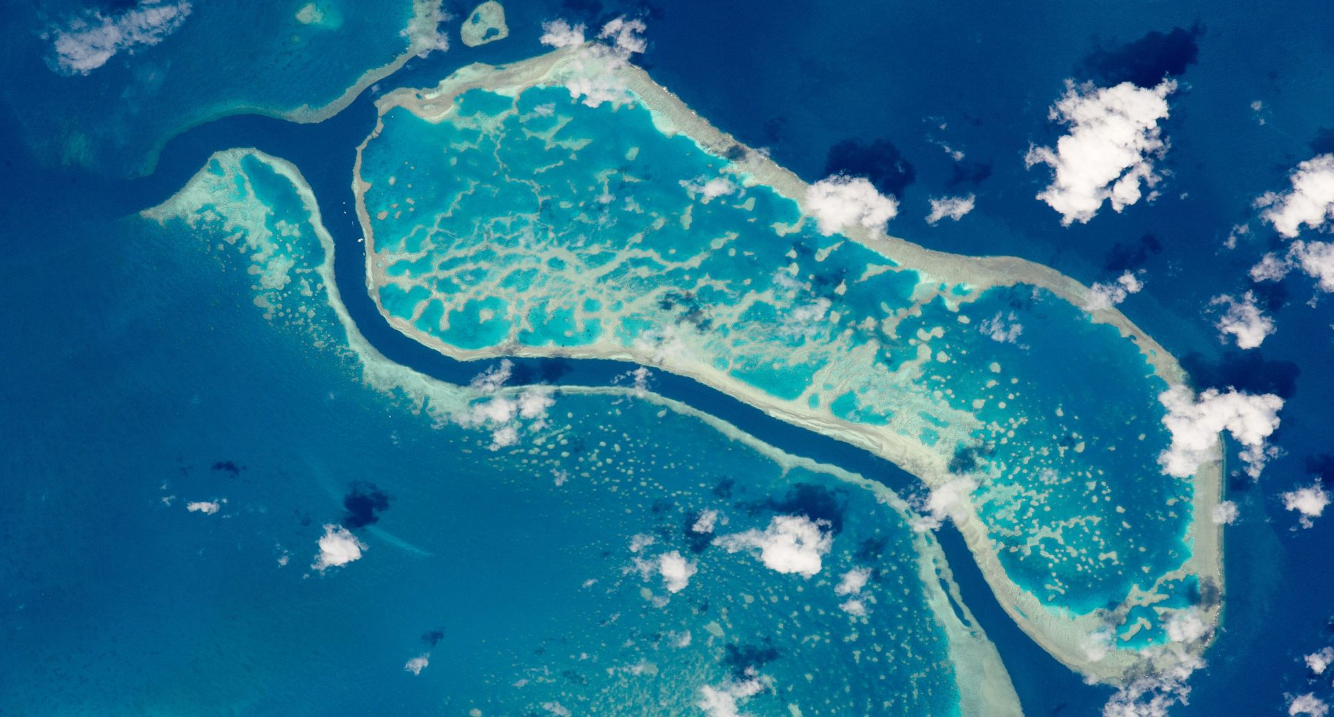 AUSTRALIJA TVRDI Veliki koraljni greben ne umire