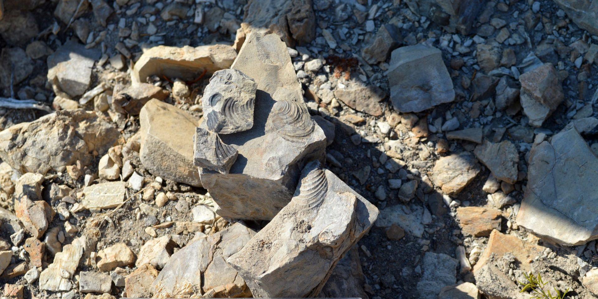 Čovjekov najstariji predak izgledao je poput naborane stare vreće