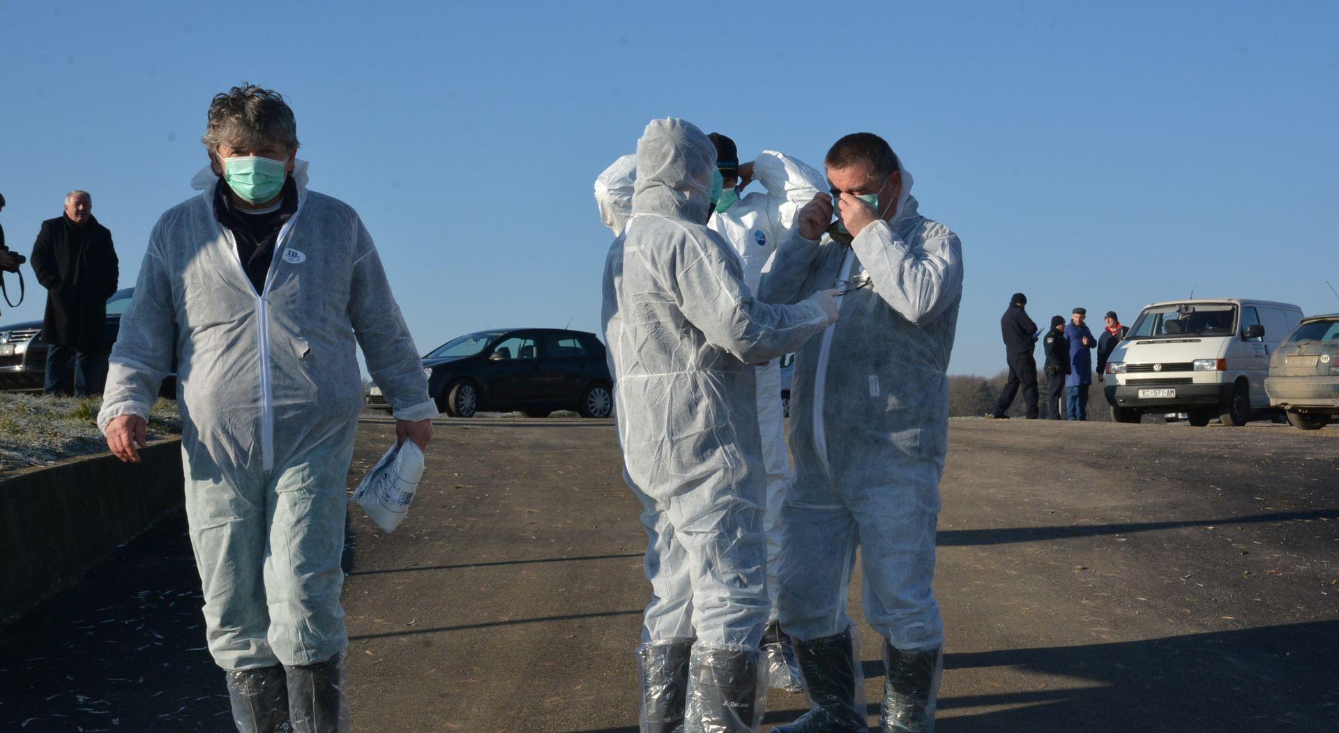 VELIKA GORICA Ministarstvo poljoprivrede objavilo točan broj peradi zaražene ptičjom gripom