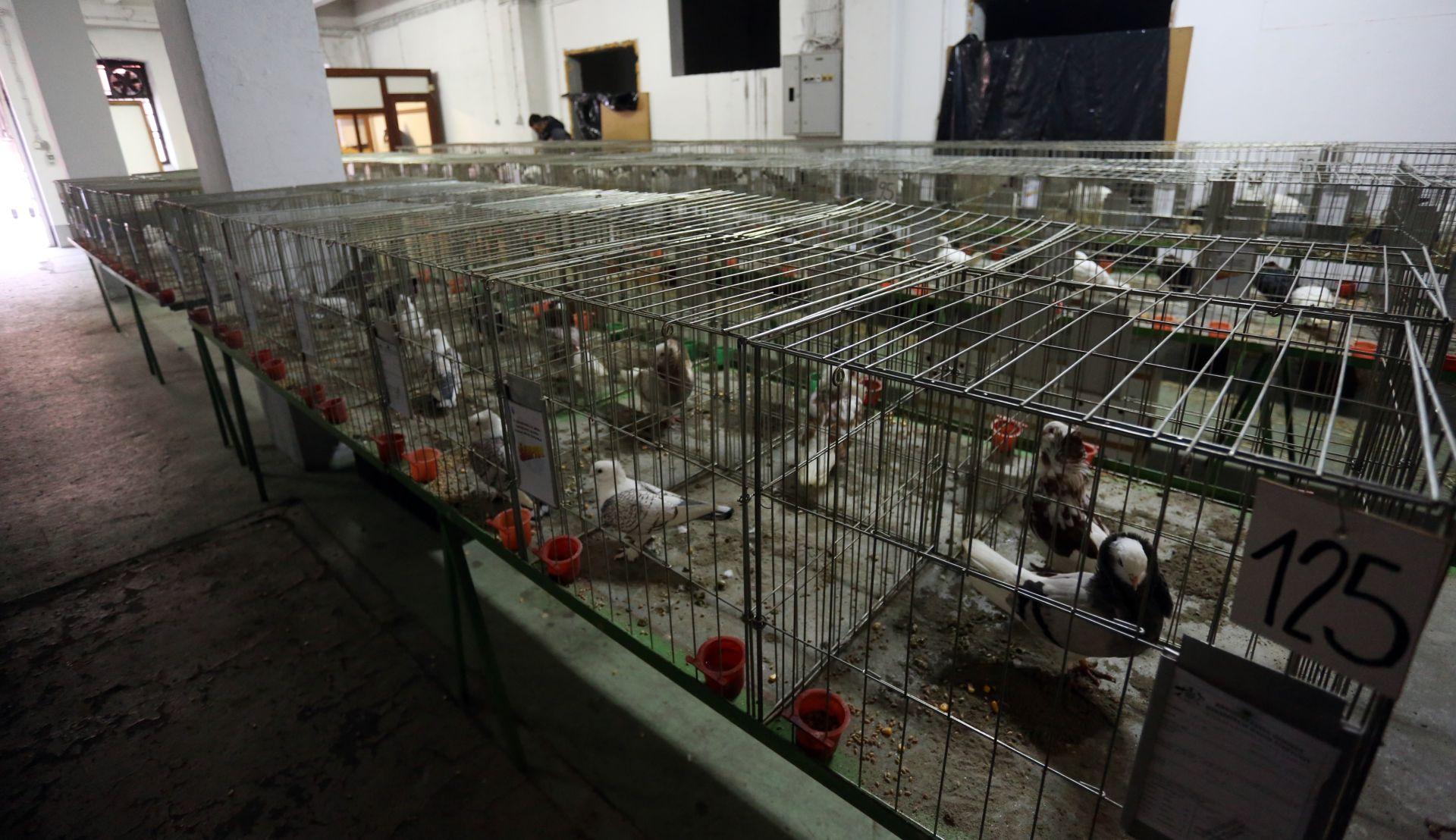 SPRJEČAVANJE PTIČJE GRIPE: Odgođena izložba malih životinja u Virovitici
