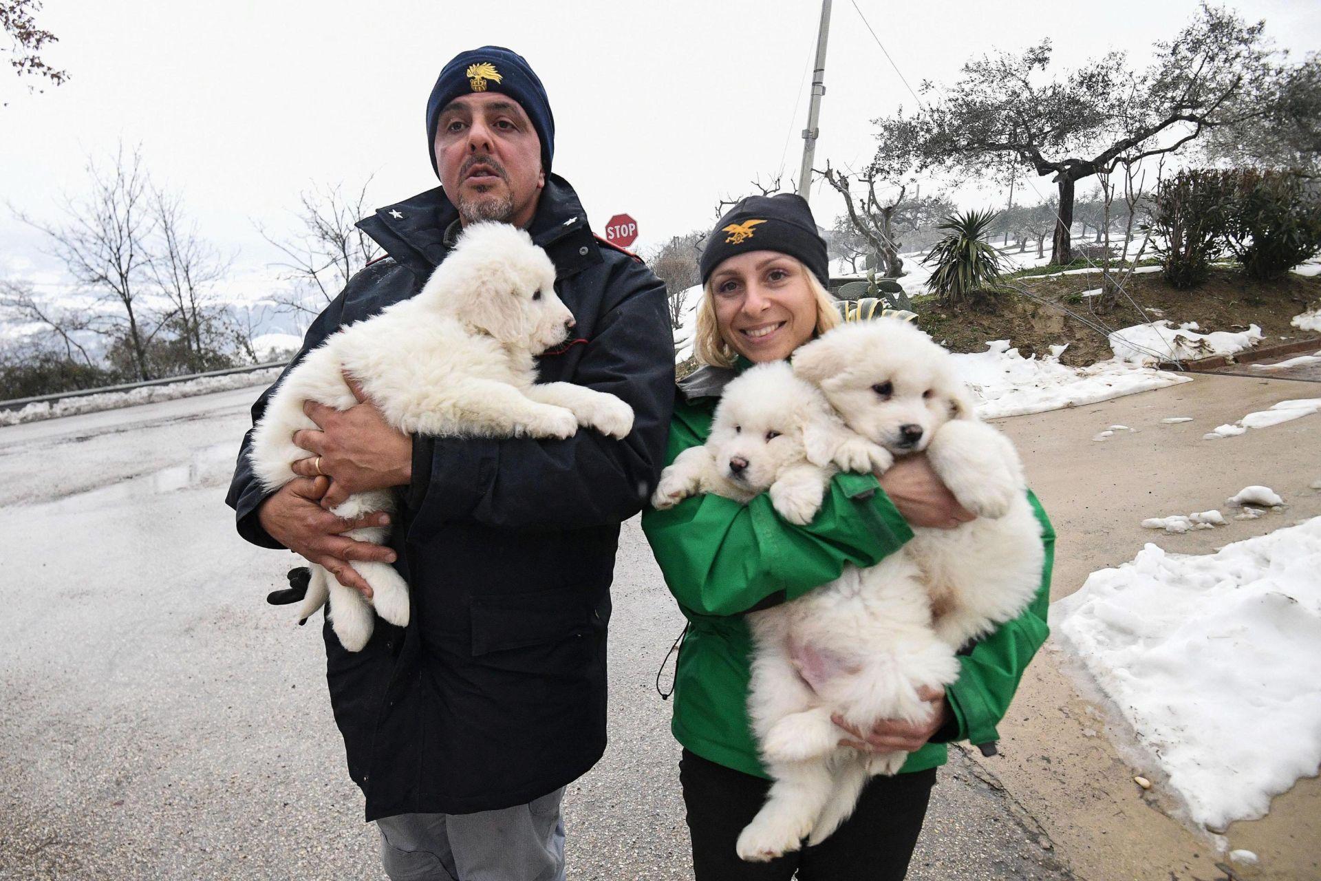 LAVINA U ITALIJI: Psići pronađeni živi u hotelu daju nade da ima preživjelih