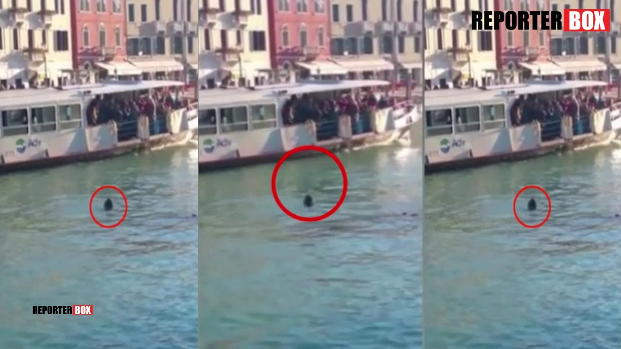 VIDEO Migrant iz Afrike utopio se u Veneciji, nitko nije skočio da ga spasi