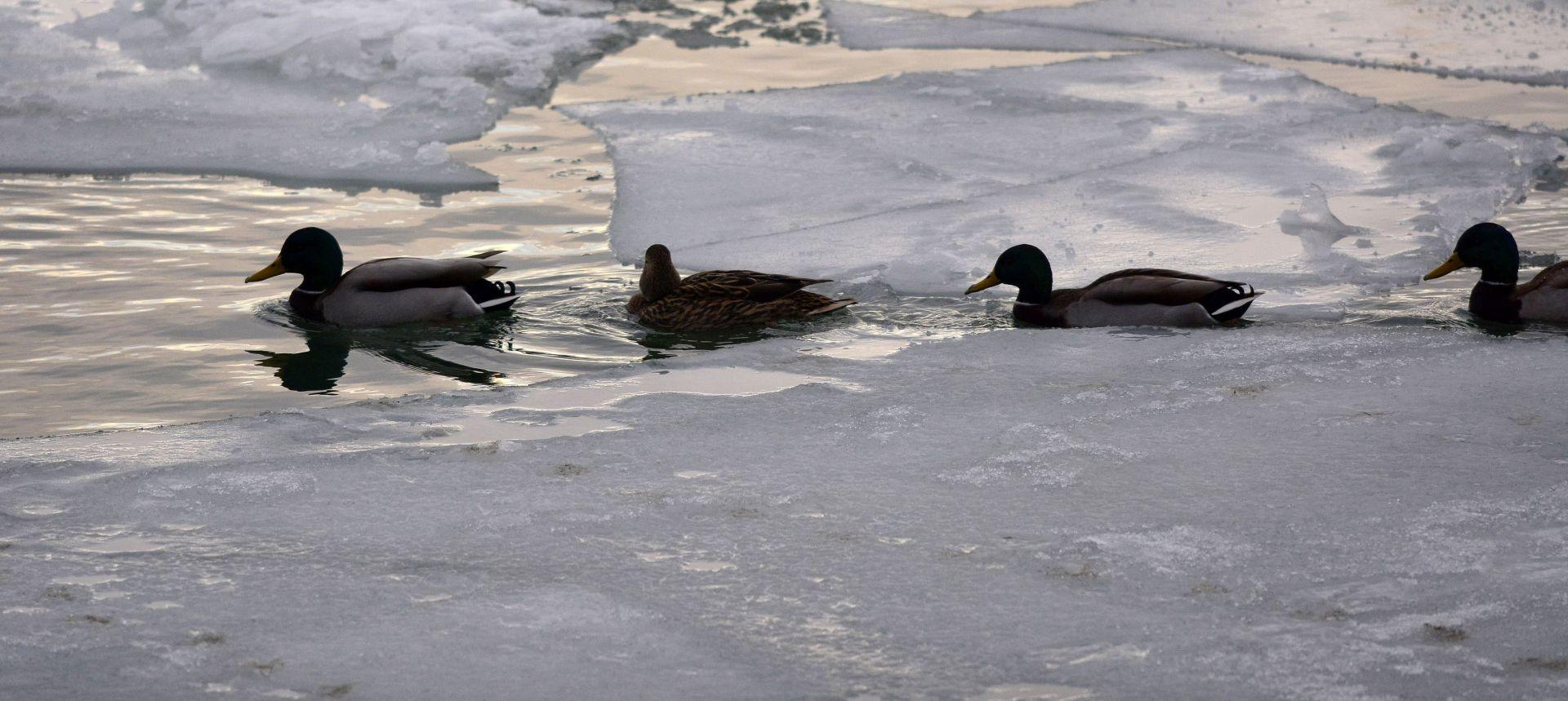 APEL MINISTARSTVU: Zeleni forum traži privremenu zabranu lova na ptice