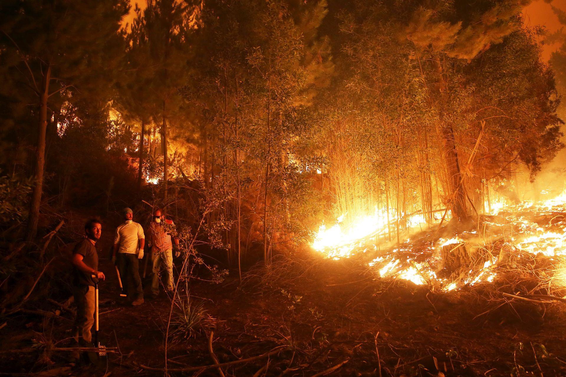 ŠUMSKI POŽARI: U Čileu poginulo šest osoba, opustošeno 190.000 hektara