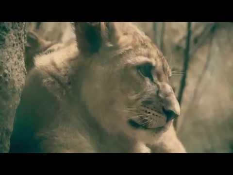 cougar upoznavanje u Australiji
