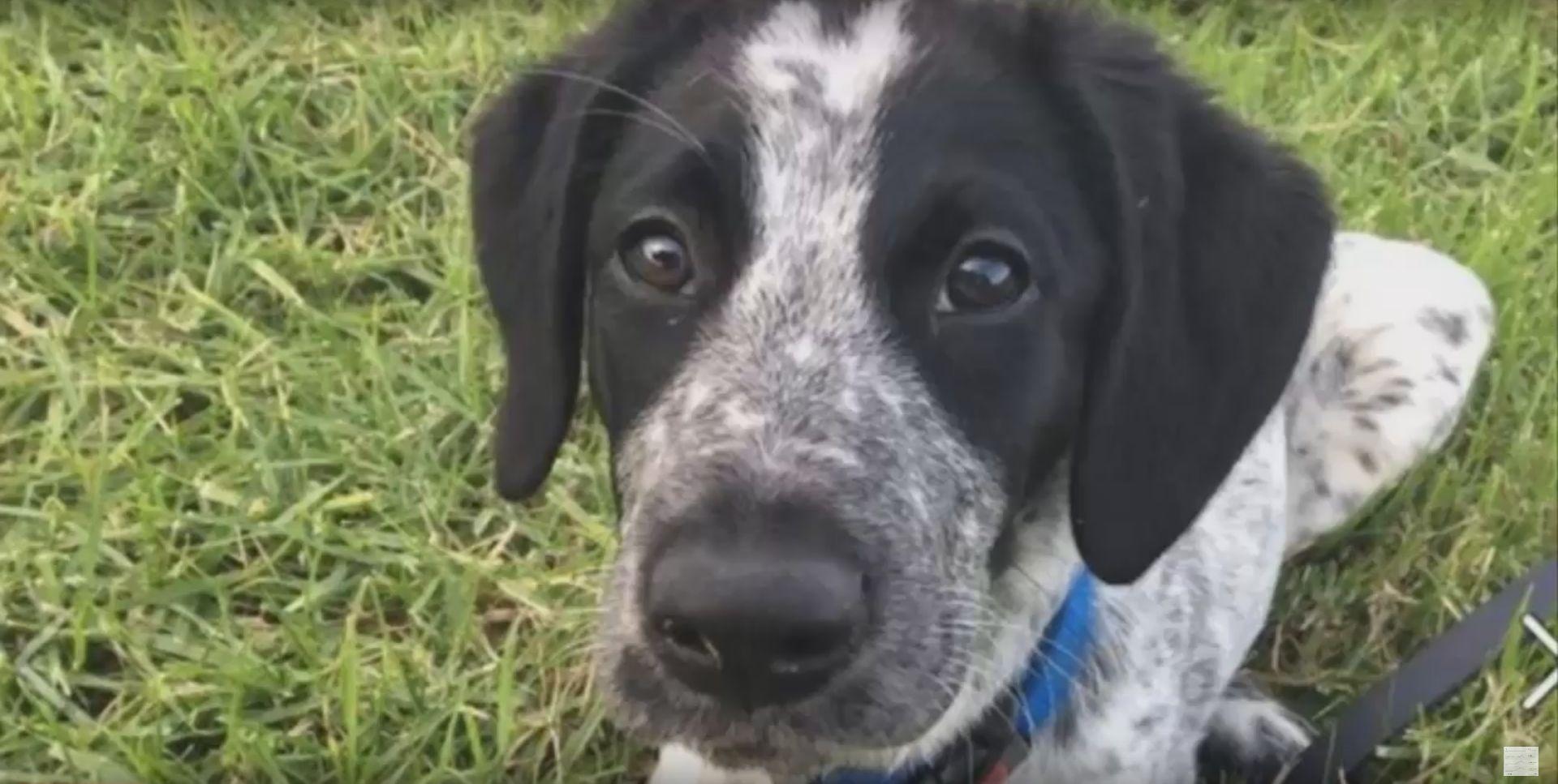 NOVI ZELAND Policija ubila psa tragača, javnost ogorčena