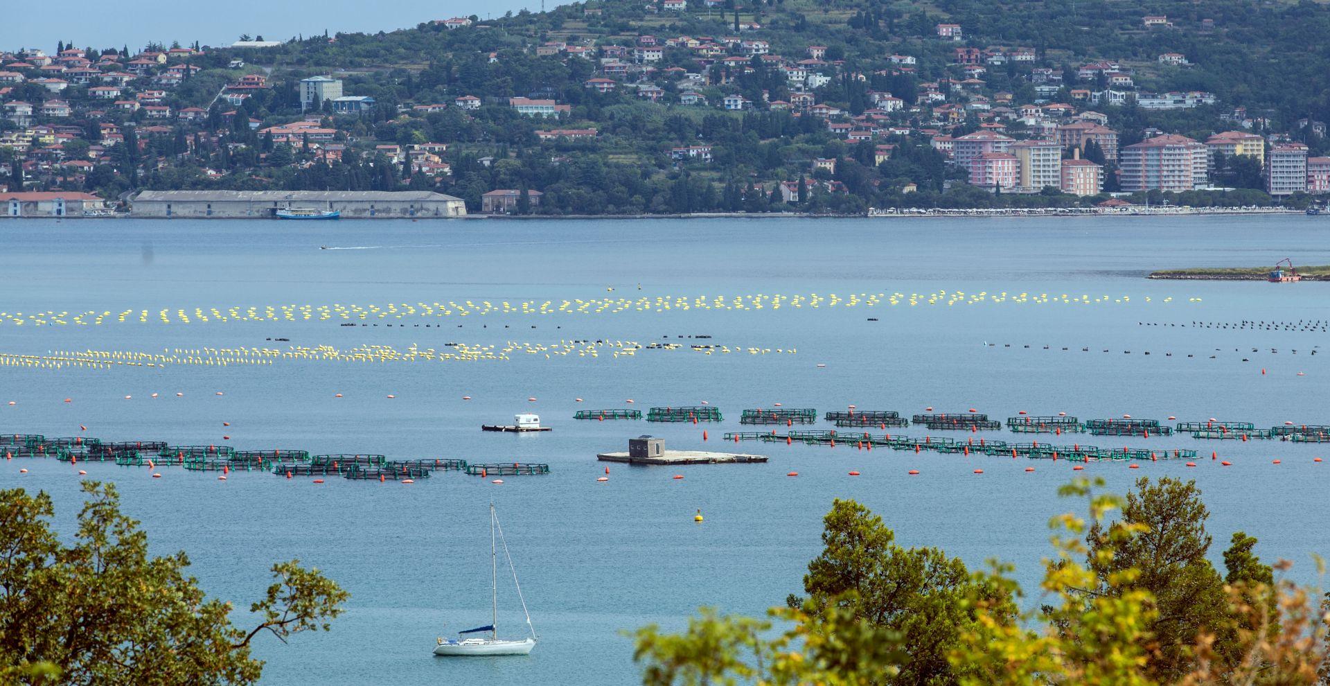 Prijetnje i prijave u Savudrijskoj vali zbog oštećene ribarske mreže