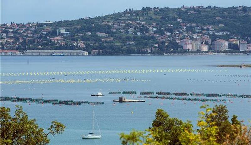 ARBITRAŽA Granica u Istri slijedi Dragonju i završava na sredini kanala sv. Odorika