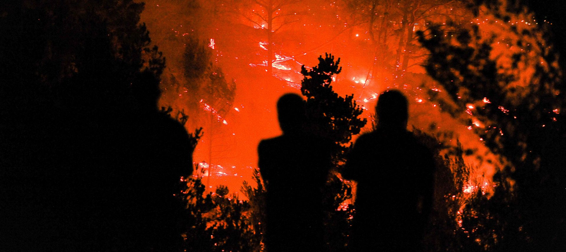 Na Hvaru izgorjelo 12 hektara borove šume
