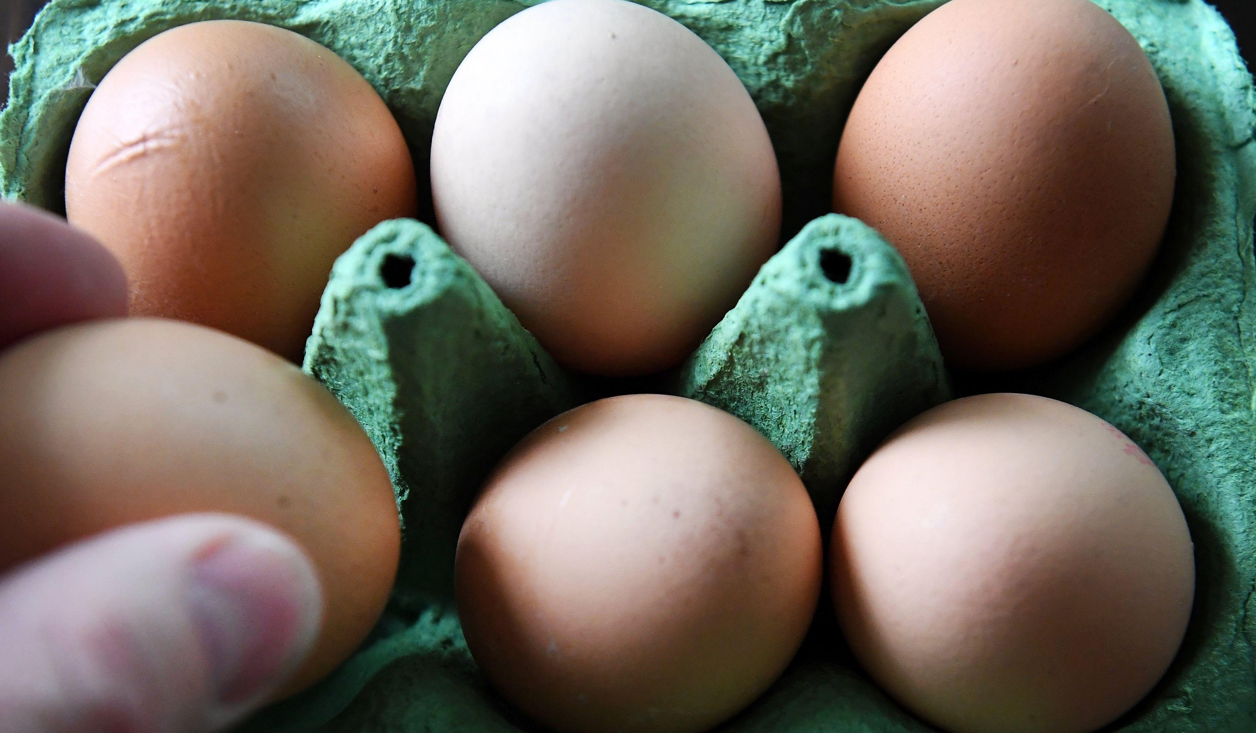 Dvojica Nizozemaca na sudu zbog kontaminiranih jaja