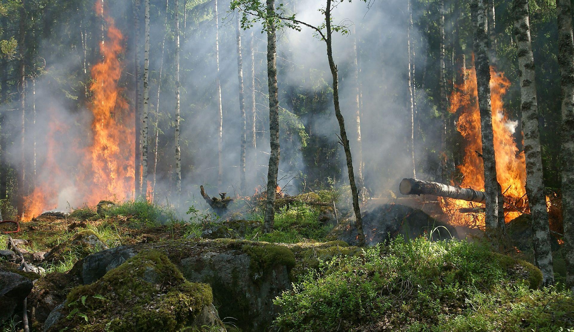 Šumski požar kod Muća