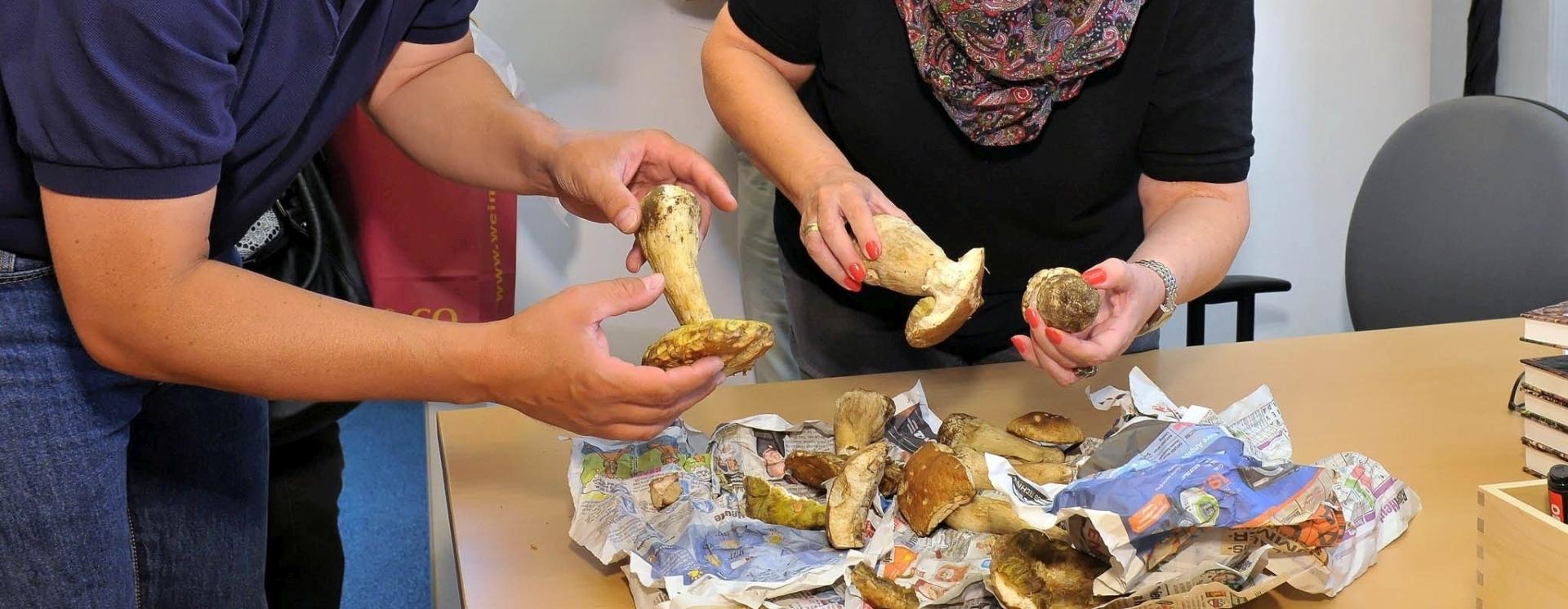 Grad Beč nudi besplatno savjetovanje tj. provjeru ubranih gljiva