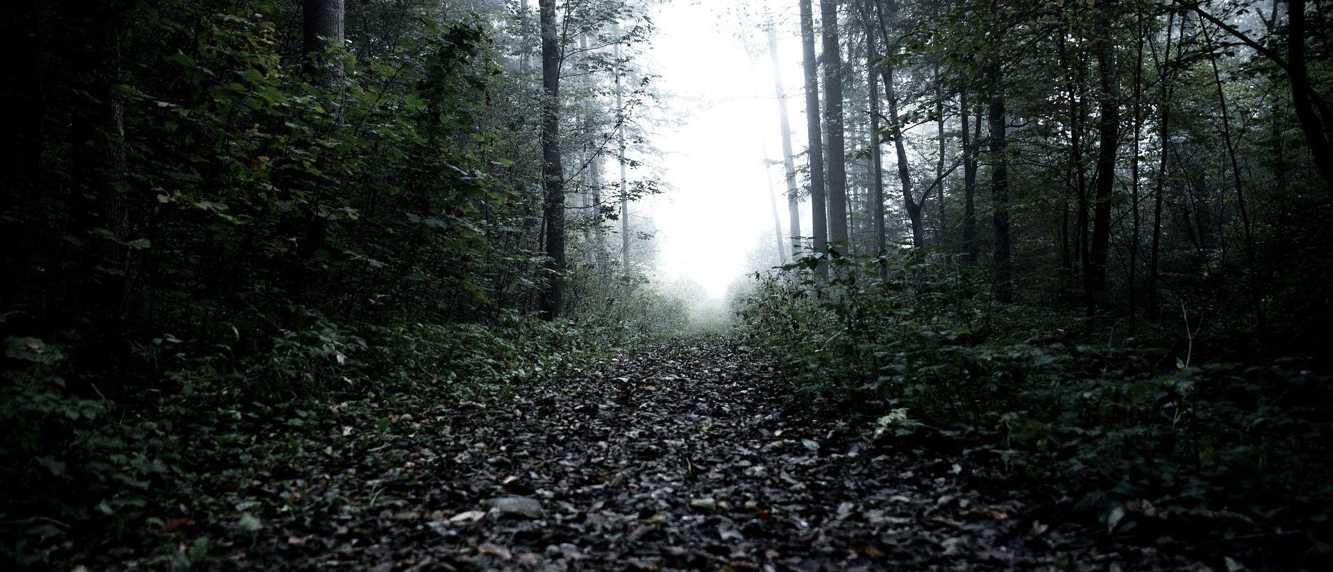 PODSTRANA U šumi pronađeni dijelovi ljudskog kostura