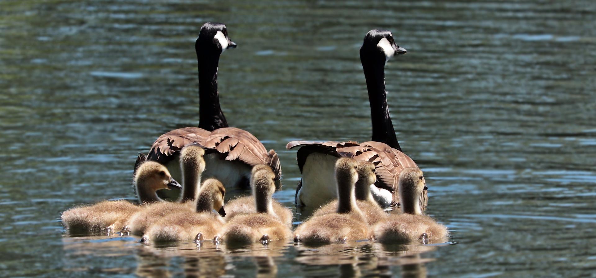 Prema novom Obiteljskom zakonu bračni par bez djece nije obitelj