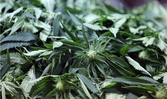Uhićen dok je zalijevao plantažu marihuane